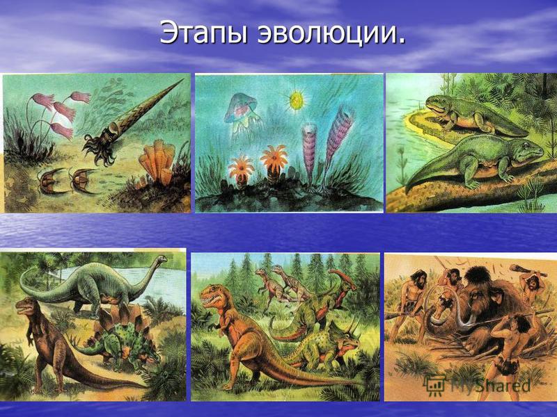 Этапы эволюции. Этапы эволюции.
