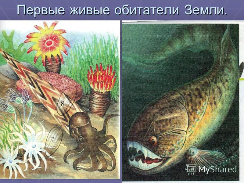 Первые живые обитатели Земли.