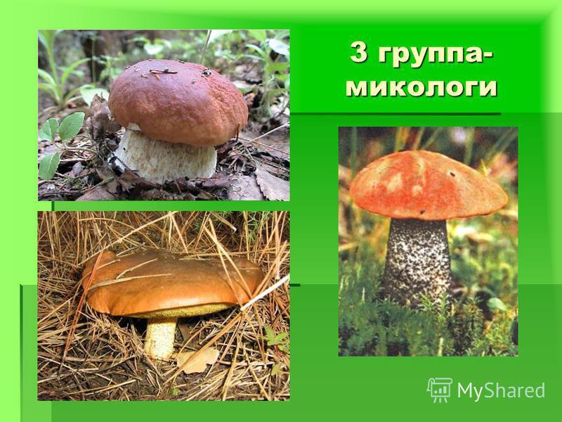 3 группа- микологи