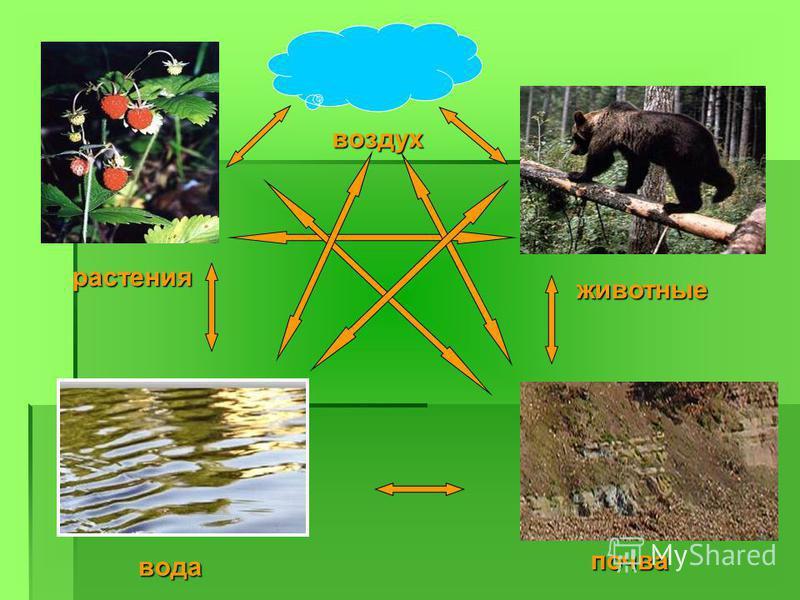 воздух растения животные почва вода