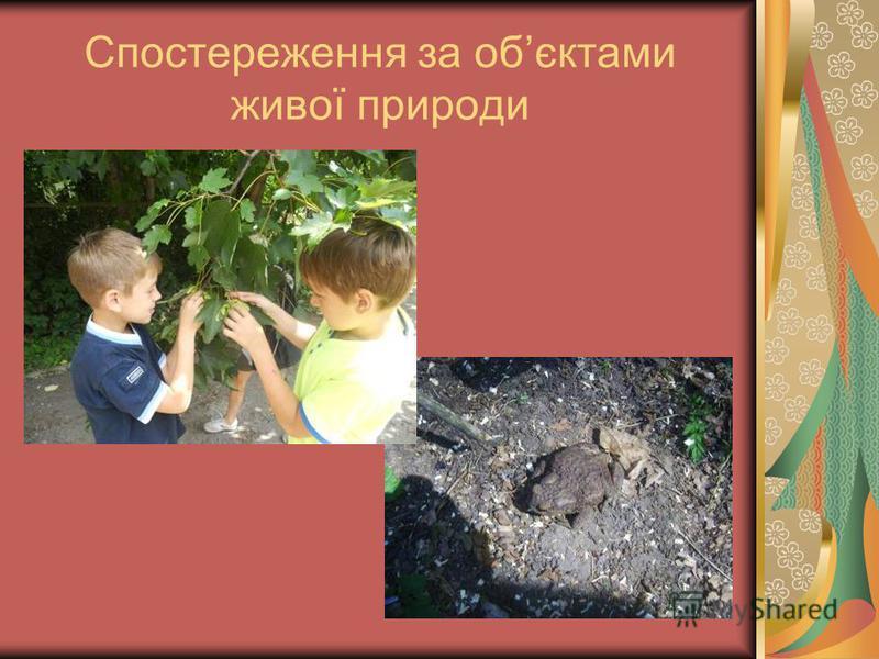 Спостереження за обєктами живої природи