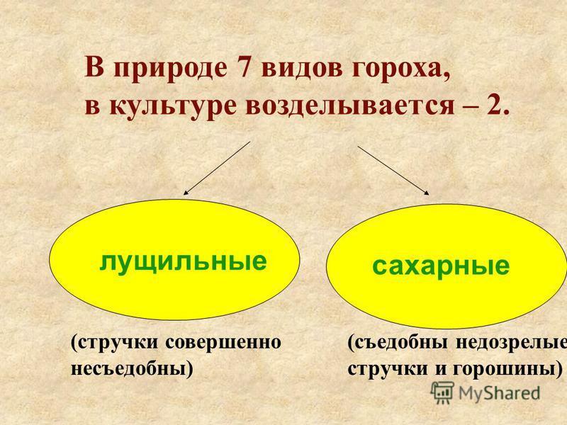 (стручки совершенно несъедобны) (съедобны недозрелые стручки и горошины) лущильные сахарные В природе 7 видов гороха, в культуре возделывается – 2.