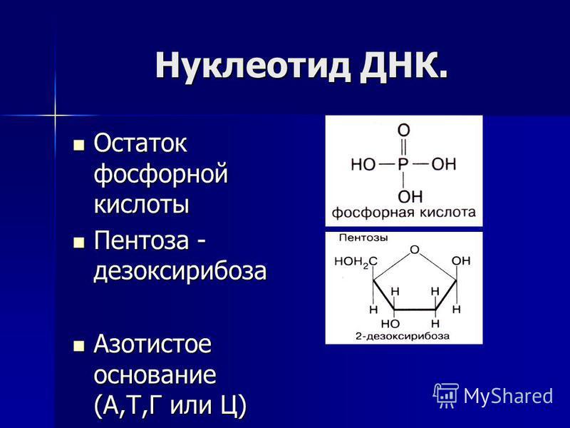 Нуклеотид ДНК. Остаток фосфорной кислоты Остаток фосфорной кислоты Пентоза - дезоксирибоза Пентоза - дезоксирибоза Азотистое основание (А,Т,Г или Ц) Азотистое основание (А,Т,Г или Ц)