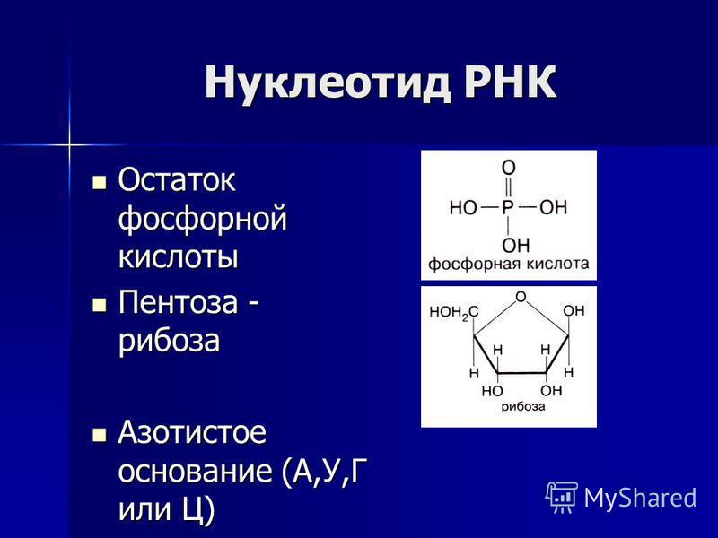 Нуклеотид РНК Остаток фосфорной кислоты Остаток фосфорной кислоты Пентоза - рибоза Пентоза - рибоза Азотистое основание (А,У,Г или Ц) Азотистое основание (А,У,Г или Ц)