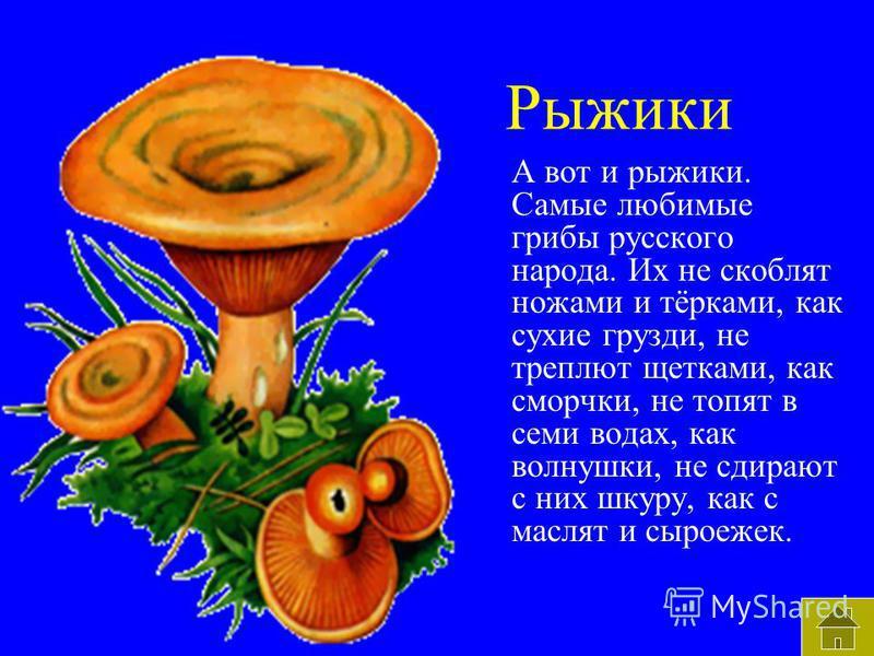Рыжики А вот и рыжики. Самые любимые грибы русского народа. Их не скоблят ножами и тёрками, как сухие грузди, не треплют щетками, как сморчки, не топят в семи водах, как волнушки, не сдирают с них шкуру, как с маслят и сыроежек.