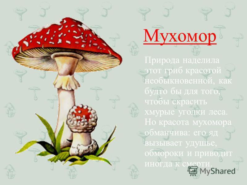 Мухомор Природа наделила этот гриб красотой необыкновенной, как будто бы для того, чтобы скрасить хмурые уголки леса. Но красота мухомора обманчива: его яд вызывает удушье, обмороки и приводит иногда к смерти.