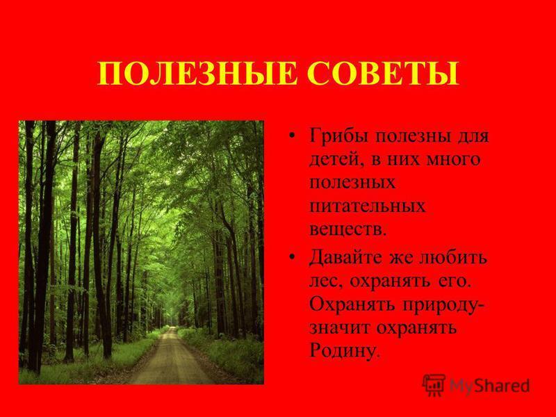 ПОЛЕЗНЫЕ СОВЕТЫ Грибы полезны для детей, в них много полезных питательных веществ. Давайте же любить лес, охранять его. Охранять природу- значит охранять Родину.