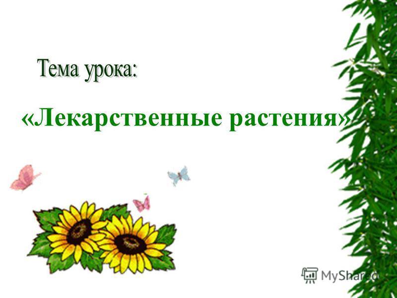 «Лекарственные растения»