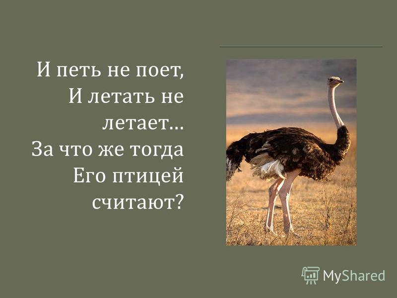 И петь не поет, И летать не летает … За что же тогда Его птицей считают ?