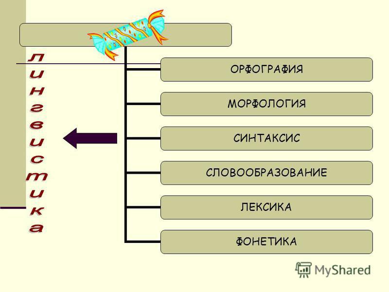 ОРФОГРАФИЯ МОРФОЛОГИЯ СИНТАКСИС СЛОВООБРАЗОВАНИЕ ЛЕКСИКА ФОНЕТИКА