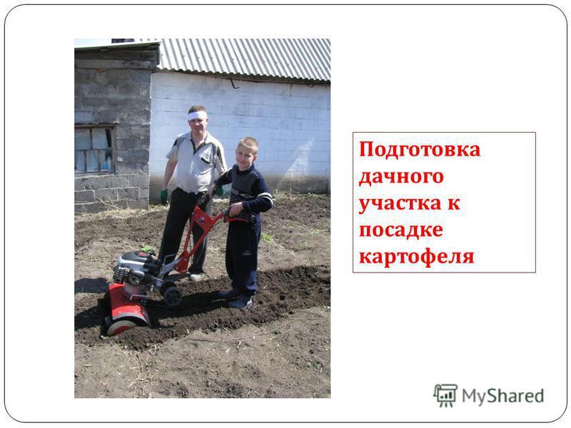 Подготовка дачного участка к посадке картофеля