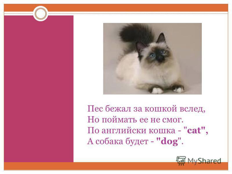 Пес бежал за кошкой вслед, Но поймать ее не смог. По английски кошка - cat, А собака будет - dog.
