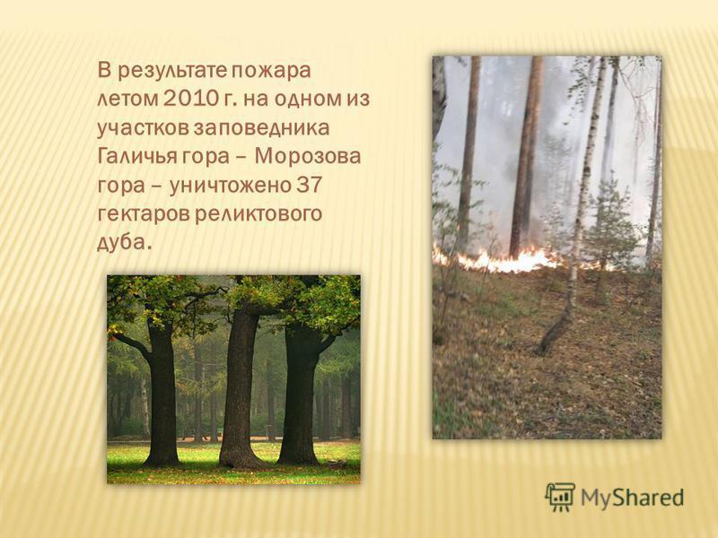 В результате пожара летом 2010 г. на одном из участков заповедника Галичья гора – Морозова гора – уничтожено 37 гектаров реликтового дуба.