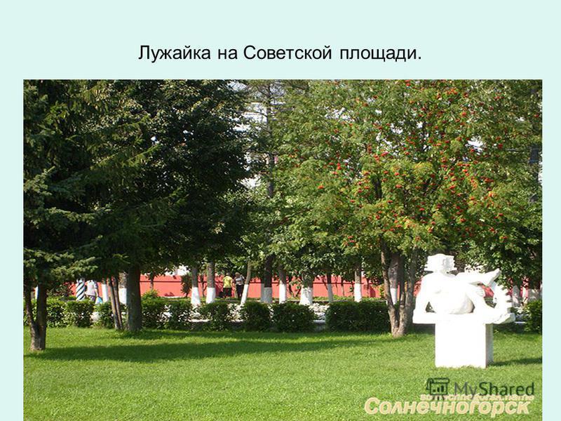 Лужайка на Советской площади.