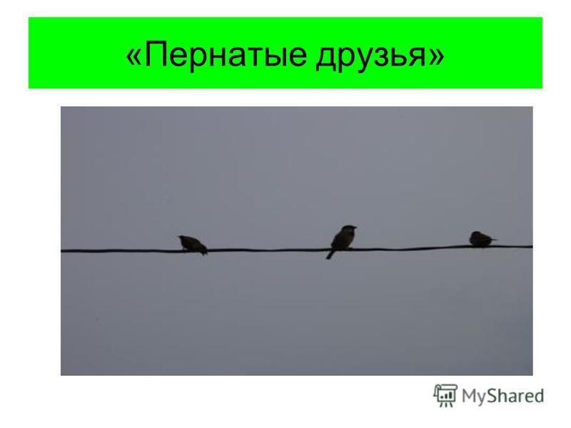 «Пернатые друзья»