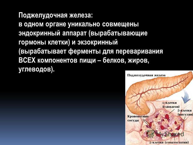 Поджелудочная железа: в одном органе уникально совмещены эндокринный аппарат (вырабатывающие гормоны клетки) и экзокринный (вырабатывает ферменты для переваривания ВСЕХ компонентов пищи – белков, жиров, углеводов).