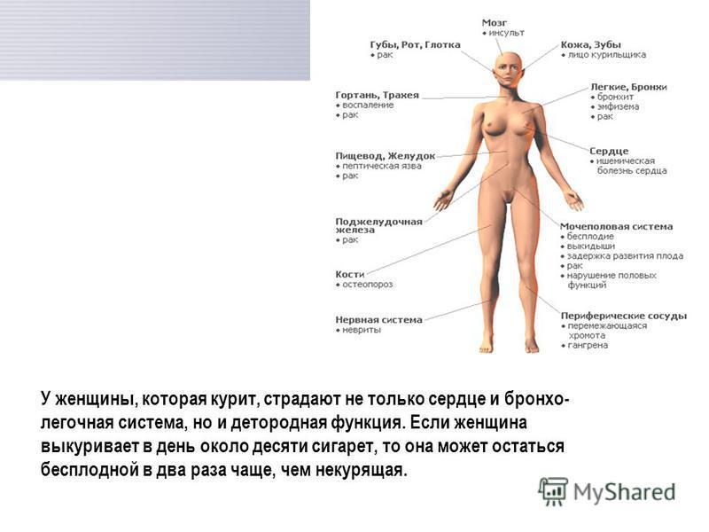 У женщины, которая курит, страдают не только сердце и бронхо- легочная система, но и детородная функция. Если женщина выкуривает в день около десяти сигарет, то она может остаться бесплодной в два раза чаще, чем некурящая.