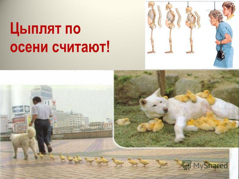 Цыплят по осени считают!