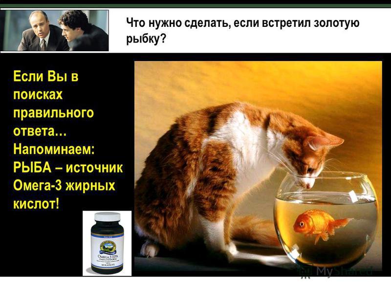 Что нужно сделать, если встретил золотую рыбку? Если Вы в поисках правильного ответа… Напоминаем: РЫБА – источник Омега-3 жирных кислот!