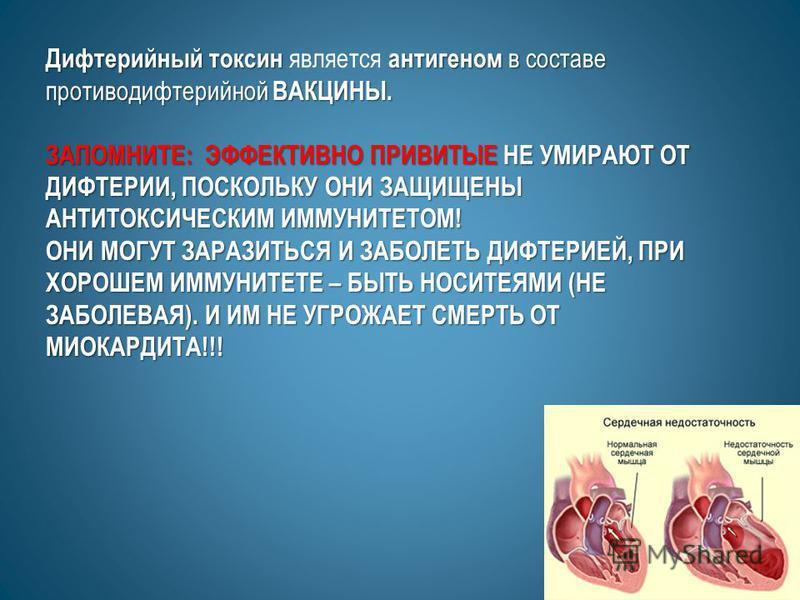 Дифтерийный токсин антигеном в составе противодифтерийной ВАКЦИНЫ. Дифтерийный токсин является антигеном в составе противодифтерийной ВАКЦИНЫ. ЗАПОМНИТЕ: ЭФФЕКТИВНО ПРИВИТЫЕ НЕ УМИРАЮТ ОТ ДИФТЕРИИ, ПОСКОЛЬКУ ОНИ ЗАЩИЩЕНЫ АНТИТОКСИЧЕСКИМ ИММУНИТЕТОМ!