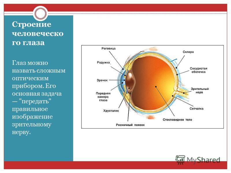 Строение человеческого глаза Глаз можно назвать сложным оптическим прибором. Его основная задача передать правильное изображение зрительному нерву.