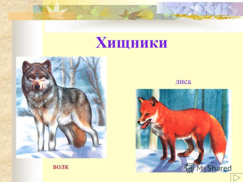 Хищники волк лиса