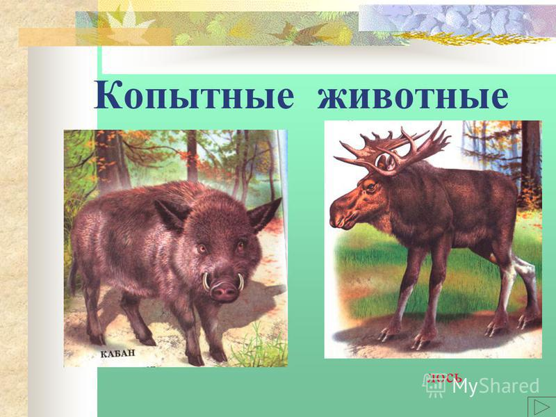 Копытные животные лось
