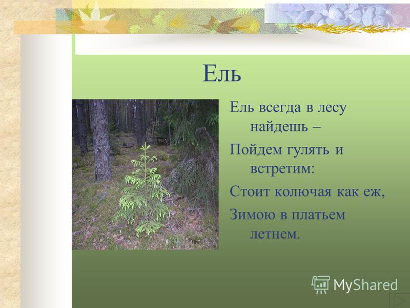 Ель Ель всегда в лесу найдешь – Пойдем гулять и встретим: Стоит колючая как еж, Зимою в платьем летнем.