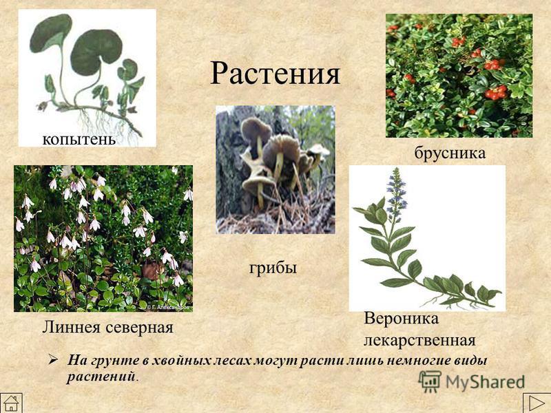 Сообщества животные растения птицы