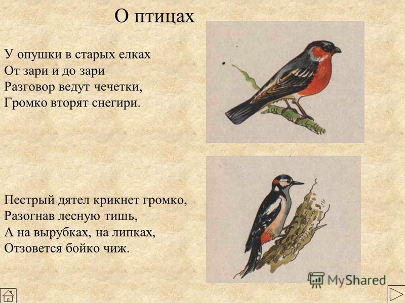 Птицы клест снегирь щегол сорока свиристель крапивник Еловыми семенами питаются белки, клесты, чижи, щеглы, чечетки, снегири, дятлы, рябчики, тетерева.