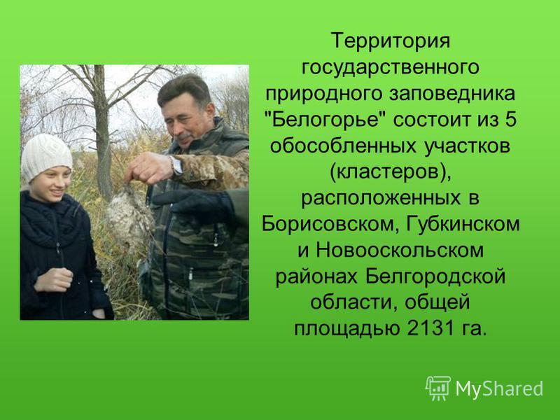Территория государственного природного заповедника Белогорье состоит из 5 обособленных участков (кластеров), расположенных в Борисовском, Губкинском и Новооскольском районах Белгородской области, общей площадью 2131 га.
