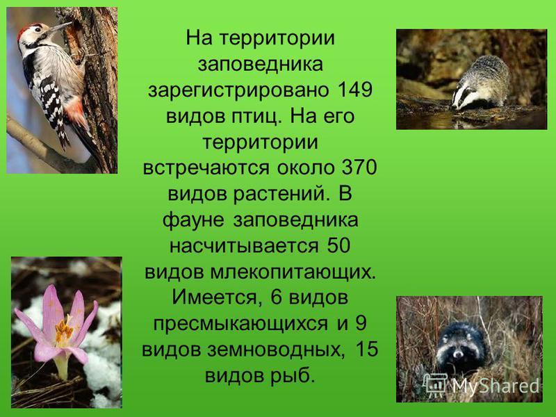 На территории заповедника зарегистрировано 149 видов птиц. На его территории встречаются около 370 видов растений. В фауне заповедника насчитывается 50 видов млекопитающих. Имеется, 6 видов пресмыкающихся и 9 видов земноводных, 15 видов рыб.