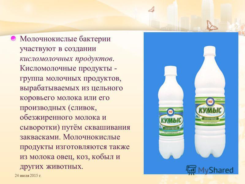 24 июля 2015 г. Молочнокислые бактерии участвуют в создании кисломолочных продуктов. Кисломолочные продукты - группа молочных продуктов, вырабатываемых из цельного коровьего молока или его производных (сливок, обезжиренного молока и сыворотки) путём