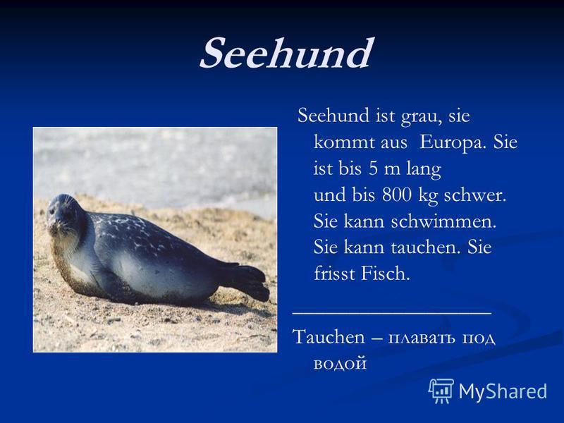Seehund Seehund ist grau, sie kommt aus Europa. Sie ist bis 5 m lang und bis 800 kg schwer. Sie kann schwimmen. Sie kann tauchen. Sie frisst Fisch. __________________ Tauchen – плавать под водой