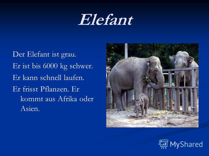 Elefant Der Elefant ist grau. Er ist bis 6000 kg schwer. Er kann schnell laufen. Er frisst Pflanzen. Er kommt aus Afrika oder Asien.