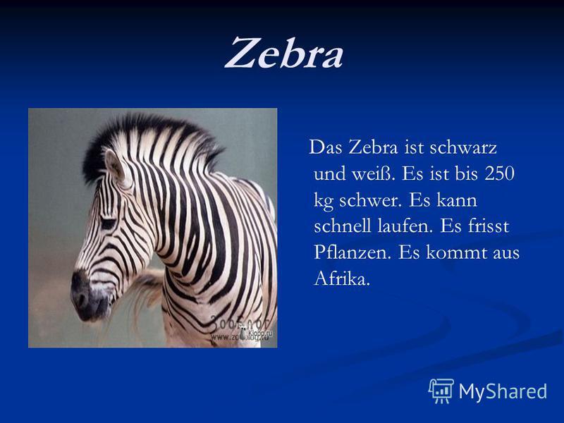 Zebra Das Zebra ist schwarz und weiß. Es ist bis 250 kg schwer. Es kann schnell laufen. Es frisst Pflanzen. Es kommt aus Afrika.