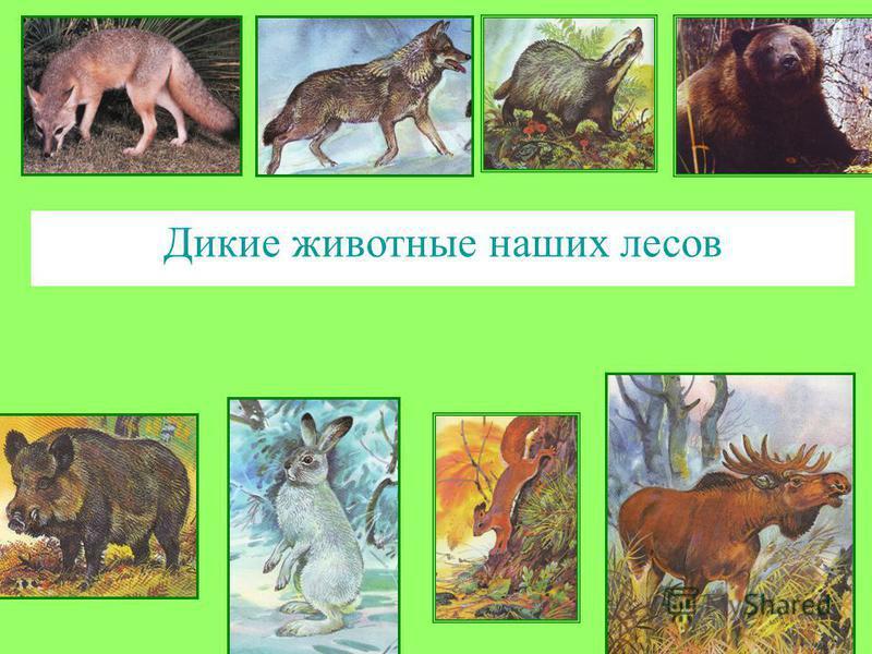 Дикие животные наших лесов