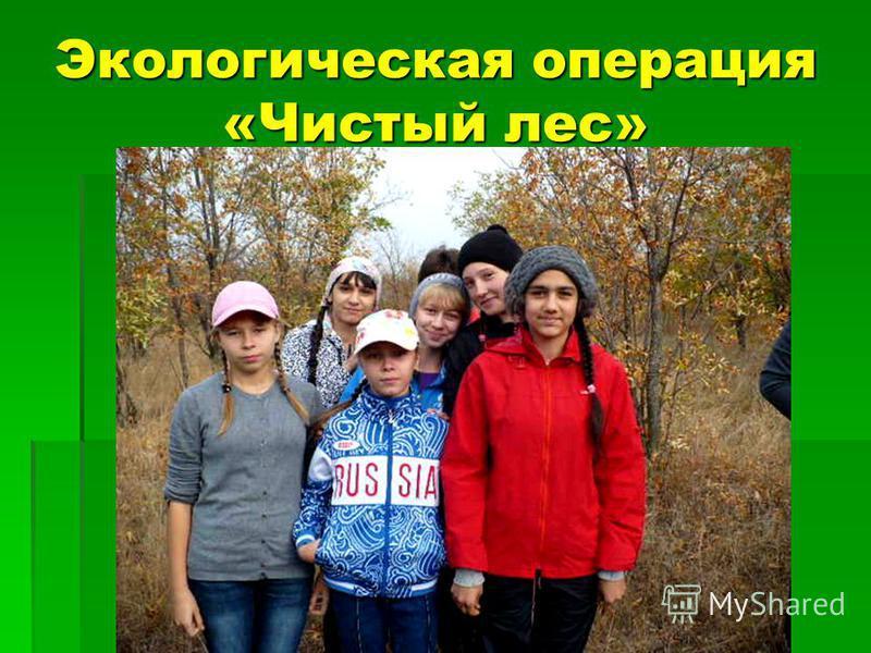 Экологическая операция «Чистый лес»