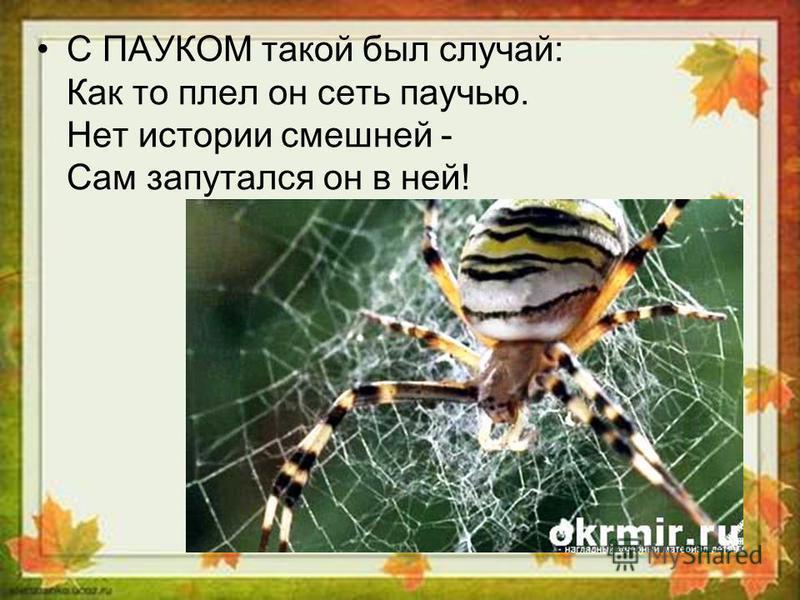 С ПАУКОМ такой был случай: Как то плел он сеть паучью. Нет истории смешней - Сам запутался он в ней!