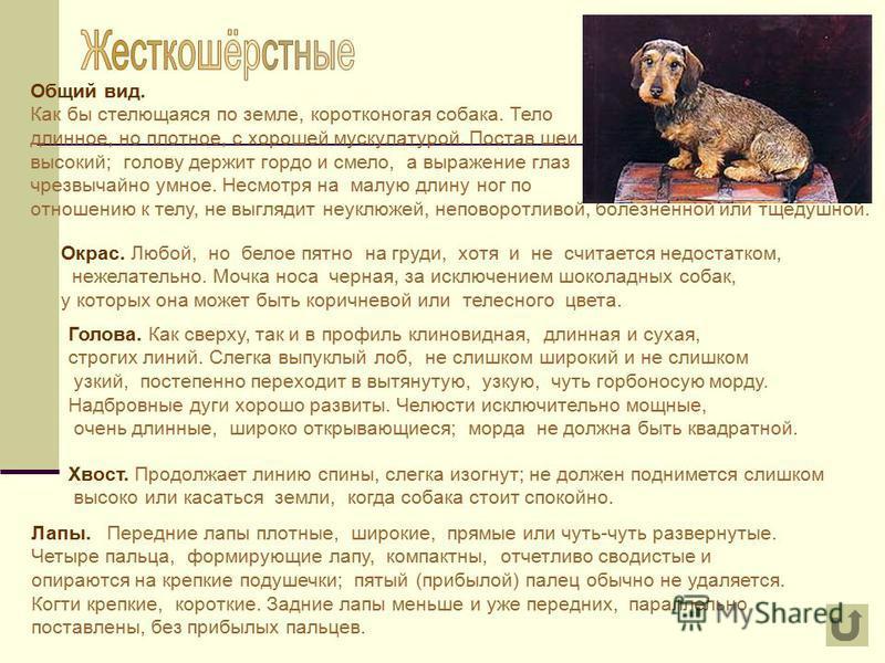 Общий вид. Как бы стелющаяся по земле, коротконогая собака. Тело длинное, но плотное, с хорошей мускулатурой. Постав шеи высокий; голову держит гордо и смело, а выражение глаз чрезвычайно умное. Несмотря на малую длину ног по отношению к телу, не выг