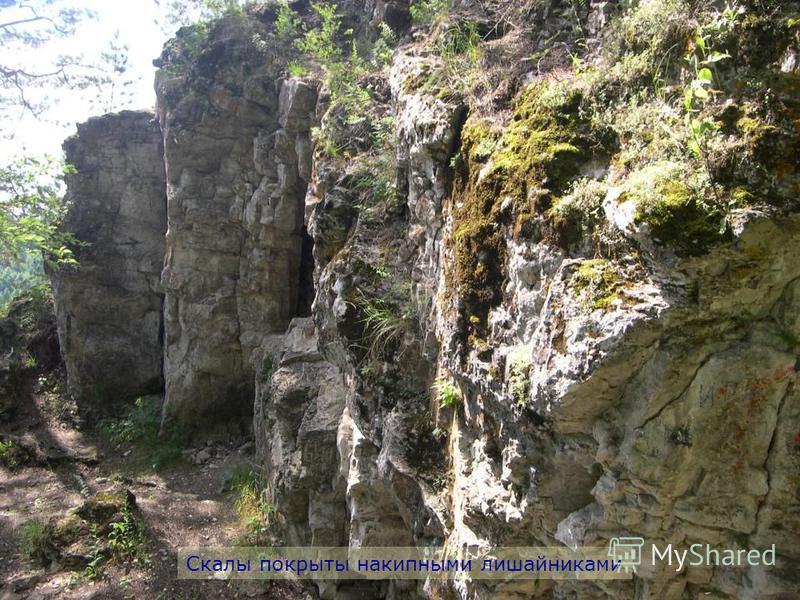 Скалы покрыты накипными лишайниками
