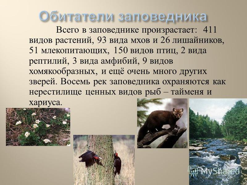 Всего в заповеднике произрастает : 411 видов растений, 93 вида мхов и 26 лишайников, 51 млекопитающих, 150 видов птиц, 2 вида рептилий, 3 вида амфибий, 9 видов хомякообразных, и ещё очень много других зверей. Восемь рек заповедника охраняются как нер