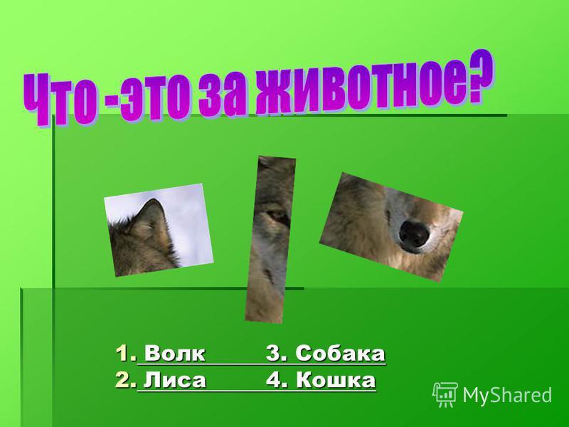 1. Волк 3. Собака Волк 3. Собака Волк 3. Собака 2. Лиса 4. Кошка Лиса 4. Кошка Лиса 4. Кошка