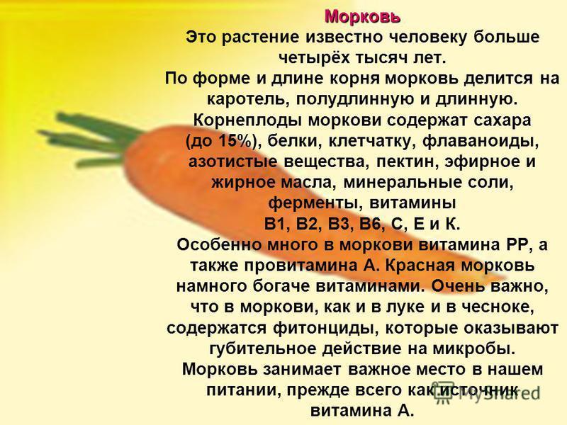 Морковь Морковь Это растение известно человеку больше четырёх тысяч лет. По форме и длине корня морковь делится на каротель, полудлинную и длинную. Корнеплоды моркови содержат сахара (до 15%), белки, клетчатку, флаваноиды, азотистые вещества, пектин,