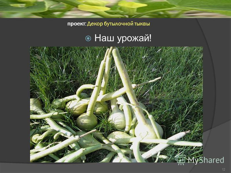 проект: Декор бутылочной тыквы 12 Наш урожай!