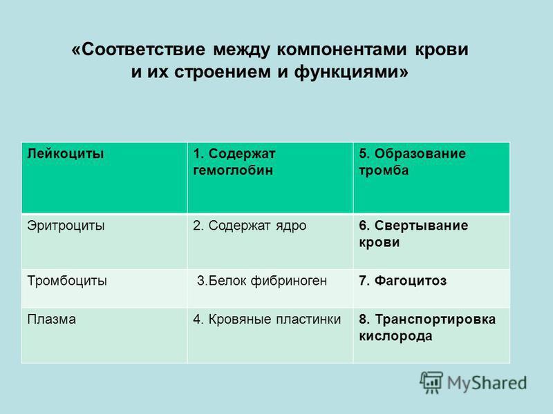 Лейкоциты 1. Содержат гемоглобин 5. Образование тромба Эритроциты 2. Содержат ядро 6. Свертывание крови Тромбоциты 3. Белок фибриноген 7. Фагоцитоз Плазма 4. Кровяные пластинки 8. Транспортировка кислорода «Соответствие между компонентами крови и их
