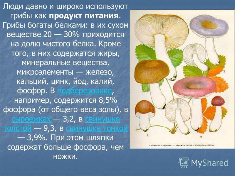 Люди давно и широко используют грибы как продукт питания. Грибы богаты белками: в их сухом веществе 20 30% приходится на долю чистого белка. Кроме того, в них содержатся жиры, минеральные вещества, микроэлементы железо, кальций, цинк, йод, калий, фос