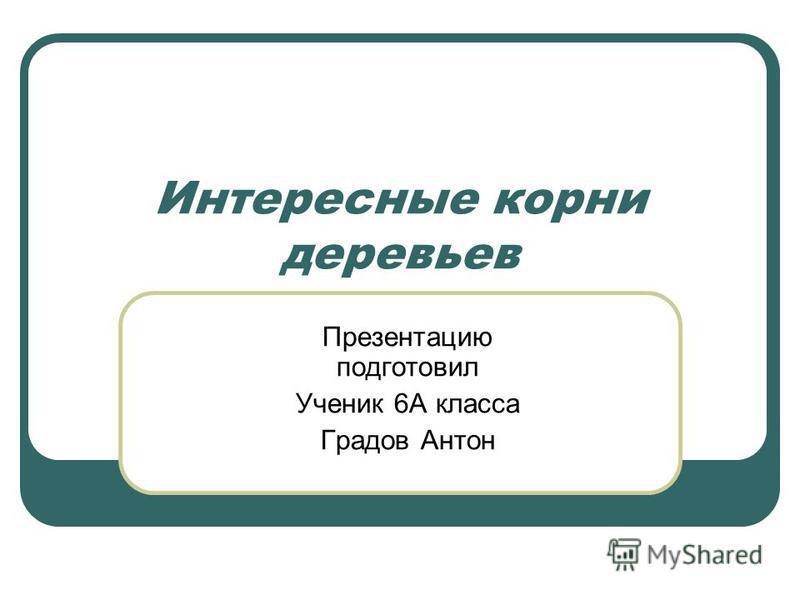 Интересные корни деревьев Презентацию подготовил Ученик 6А класса Градов Антон