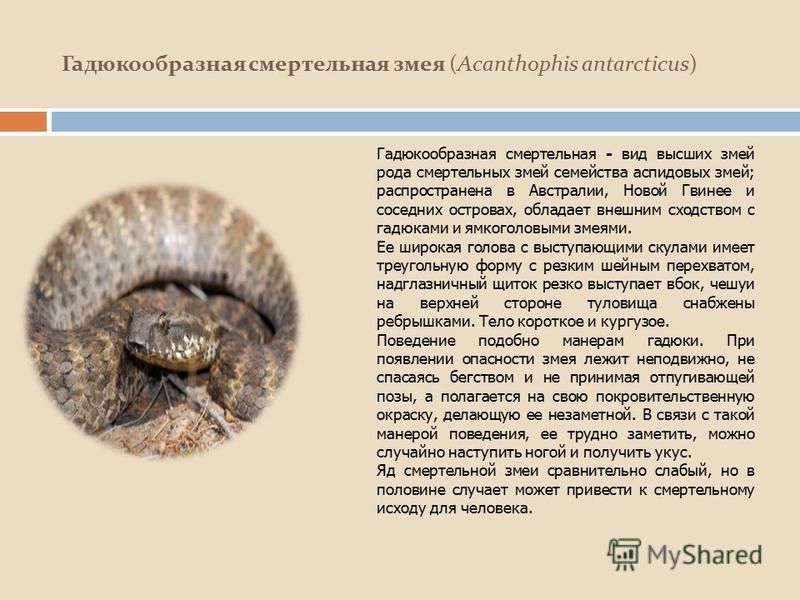 Гадюкообразная смертельная змея (Acanthophis antarcticus) Гадюкообразная смертельная - вид высших змей рода смертельных змей семейства аспидовых змей; распространена в Австралии, Новой Гвинее и соседних островах, обладает внешним сходством с гадюками