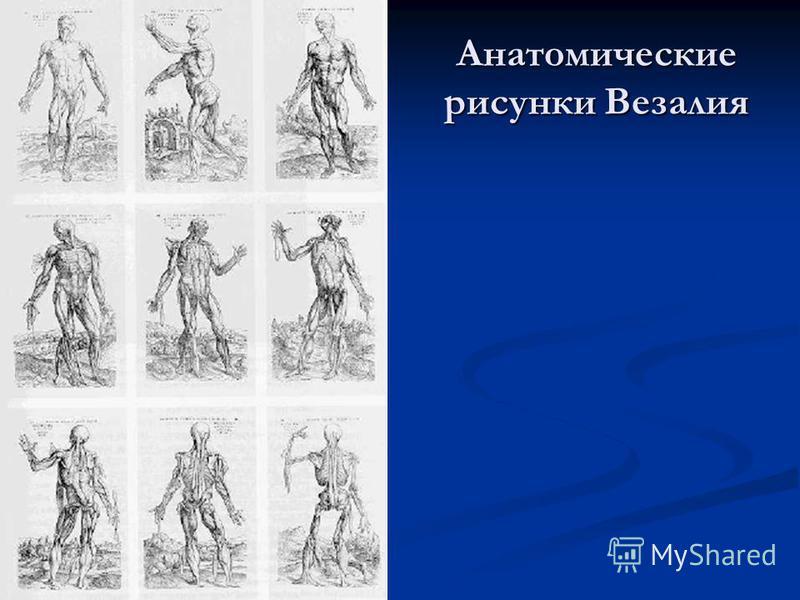 Анатомические рисунки Везалия